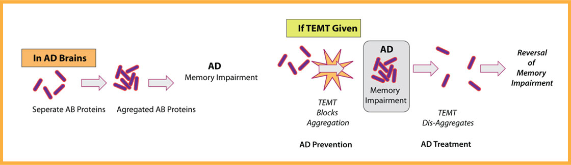 TEMT Prevents and Treats AD by blocking and reversing Aβ aggregation.